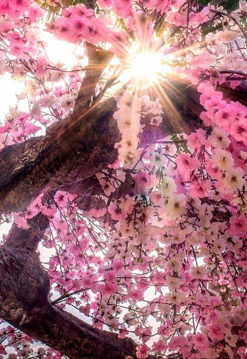 Epingle Par Brigitte Sur Fleurs Pinterest Flowers Beautiful Et