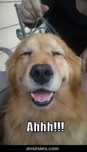 Ahhhh Que Rico Cute Dogs Happy Dogs Cute Animals