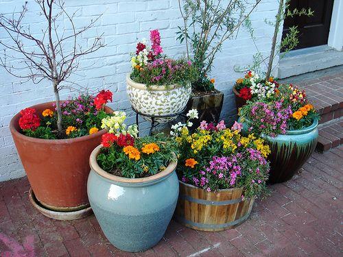 Interesting Potted Garden Flowers Ideas For Arkansas Texas