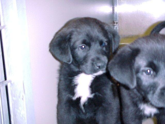 Lab And Border Collie Mix 3 Yogi Border Collie Mix Best Dog Breeds Pup