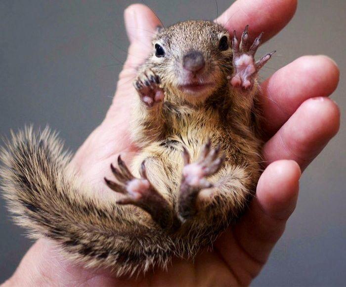 Cute Baby squirrel | S...
