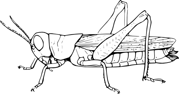 Insect Coloring Pages Best Coloring Pages For Kids Insect Coloring Pages Bugs Drawing Drawing Sheet