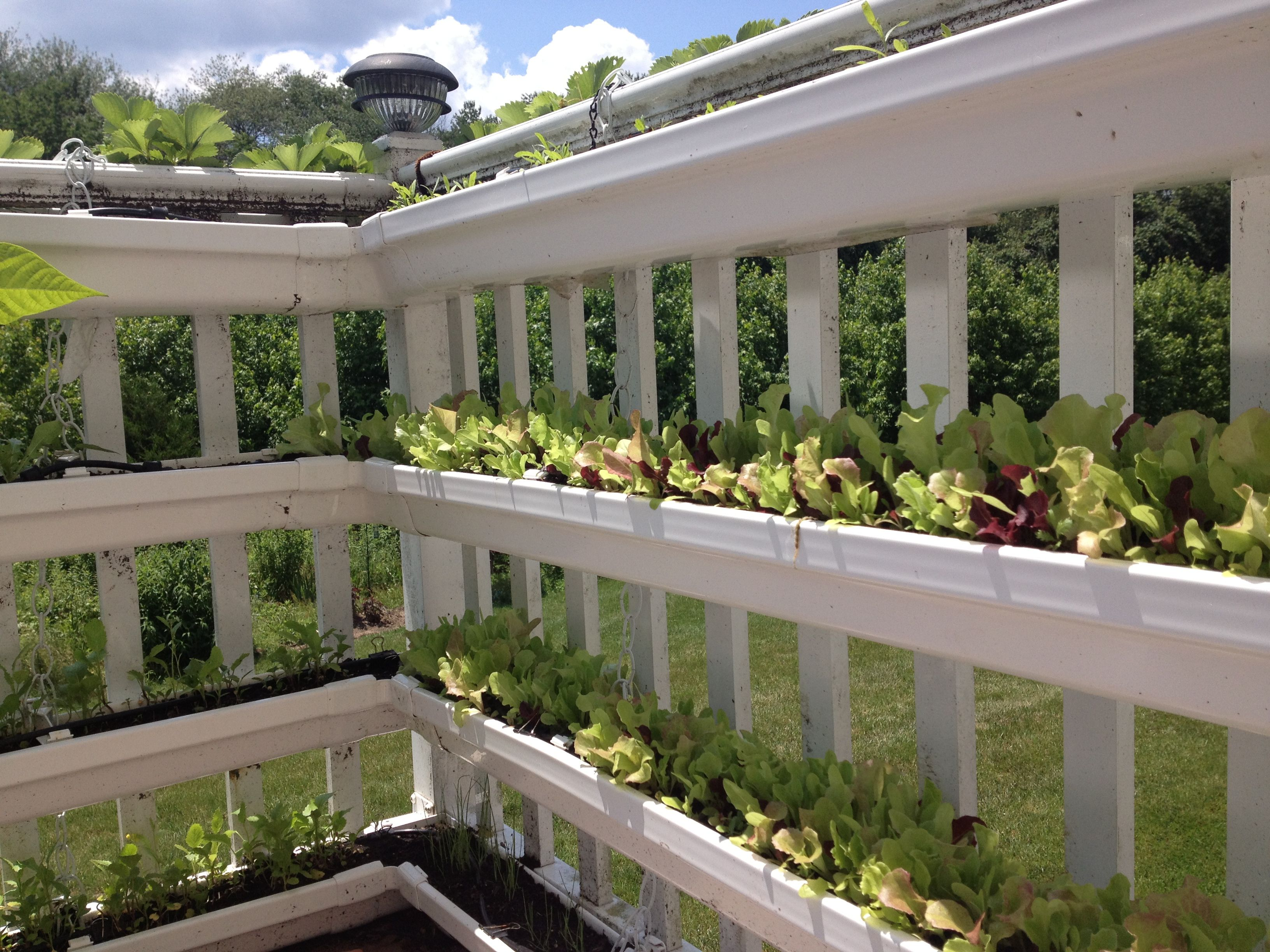 another view of my gutter balcony garden w auto drip irrigation