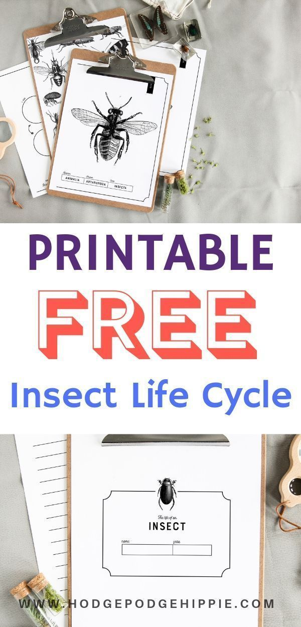 Insect Life Cycle FREE Printable Great Learning