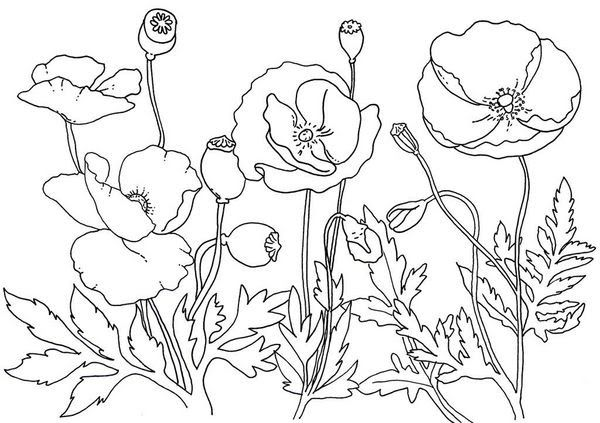 Pin By Naeem Sheikh On Dandelions Pompom Poppy Coloring Page Flower Coloring Pages Remembrance Day Poppy