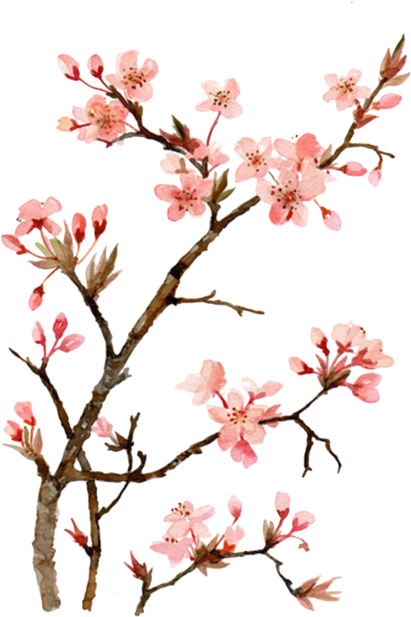 Twig Drawing Cherry Blossom Japanese Cherry Blossom Flower Painting Png Download In 2020 Cherry Blossom Painting Cherry Blossom Art Cherry Blossom Painting Acrylic