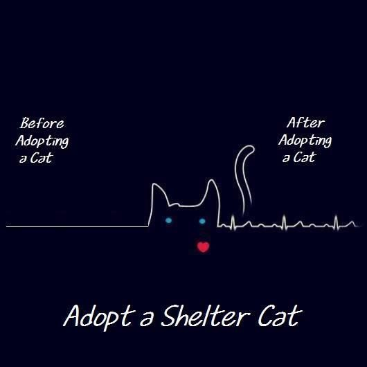 We like this idea of adopting a cat shelter!