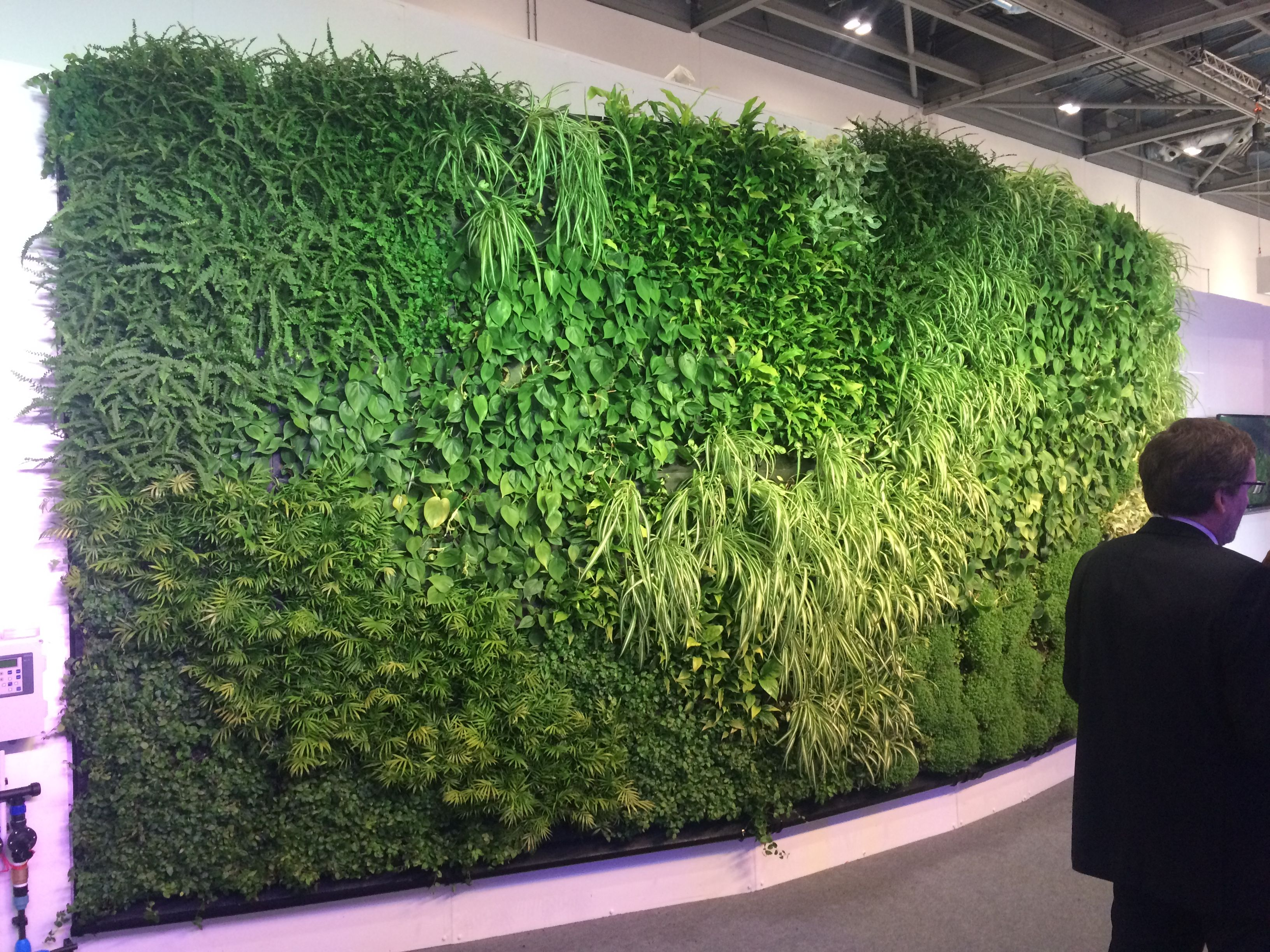 How To Build A Living Wall internal living wallbiotecture at eco build 2015 | living