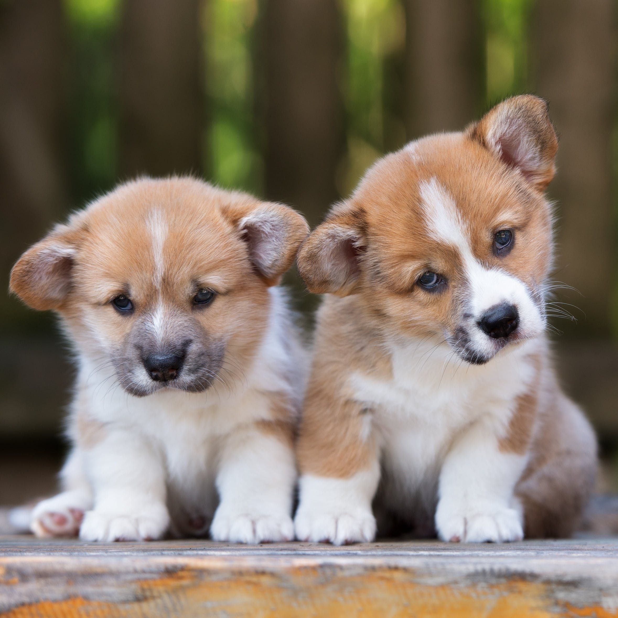 California Just Became The First State To Ban The Sale Of Dogs From Puppy Mills But Not Everyone S Happy About It Puppy Training Puppies Animals