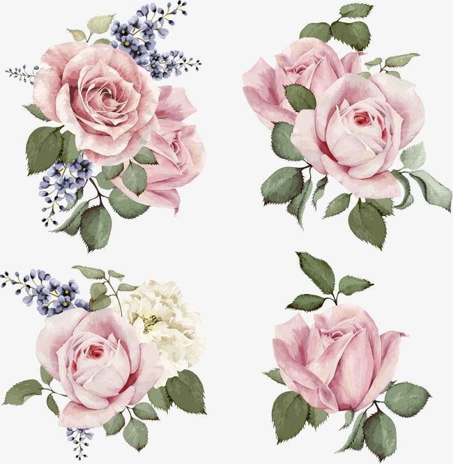 png set of bouquets of roses watercolor can be used as greeting royalty free cliparts vectors and stock illustration stopboris Image collections