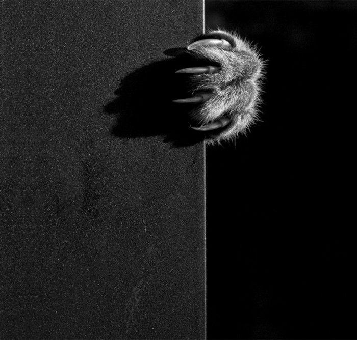 la photo artistique noir et blanc choisir la meilleure de notre galerie cats. Black Bedroom Furniture Sets. Home Design Ideas