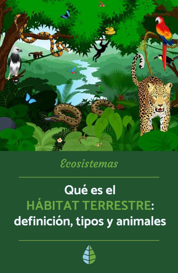 Pin En Ecosistemas