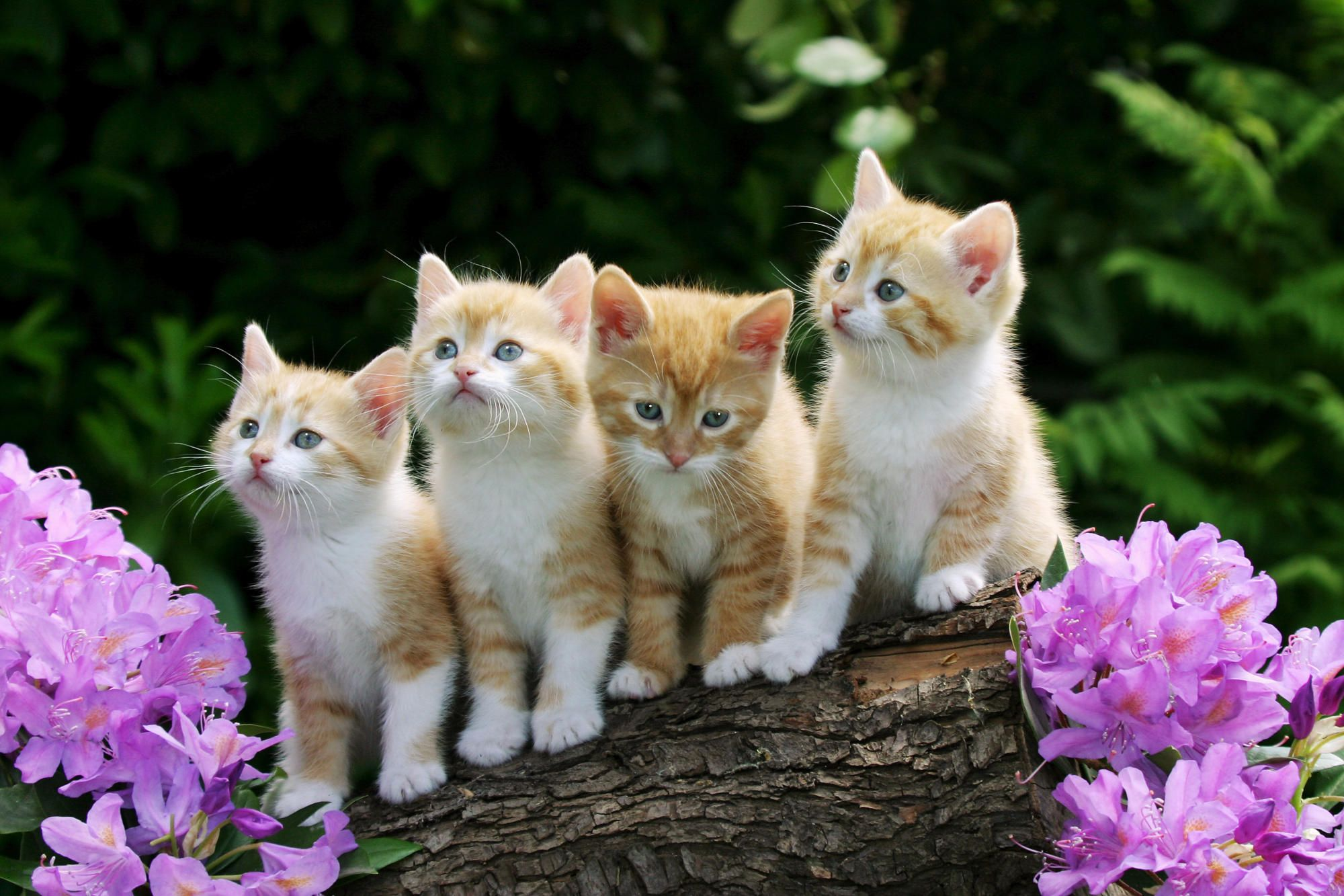 Another 25 Amazing Cute And Funny Cats Compilations Set 3 Rainbow Kittens Kitten Wallpaper Pets