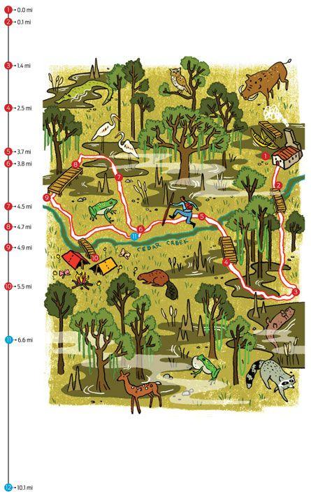 Rip Go Kingsnake Trail Congaree National Park SC Backpacker