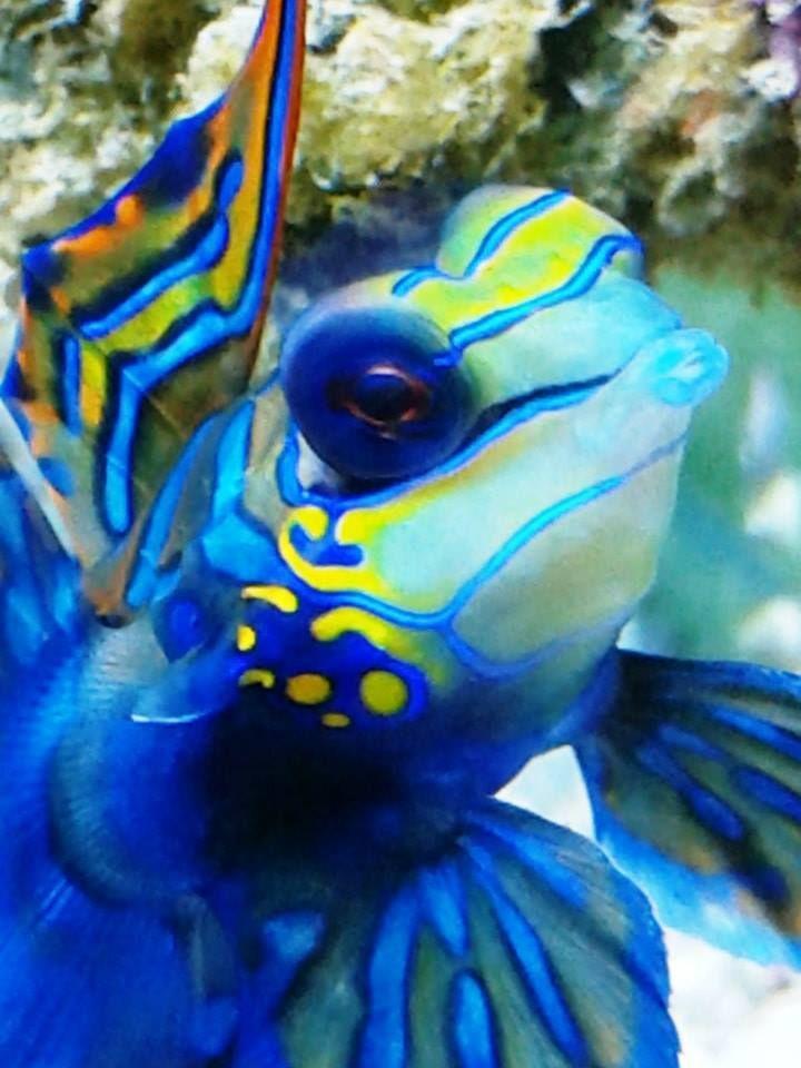 Guilherme's aquarium