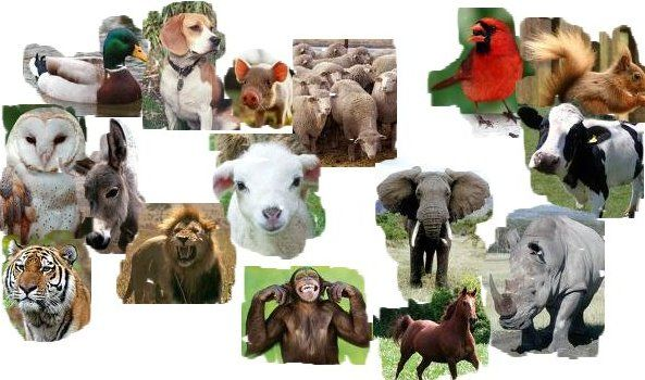 English Exercises: Animals and sounds