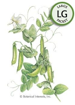 Sugar Daddy snap peas -- Pods can be served fresh with dip, stuffed with cream cheese or added to salads. Add to stir-fries and soups, or steam for a delicious vegetable.