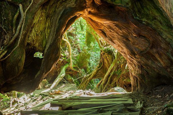 Forests of Yakushima The Fairytale Forests of Yakushima The island features deer, monkeys, and thousand-year-old trees.The Fairytale Forests of Yakushima The island features deer, monkeys, and thousand-year-old trees.