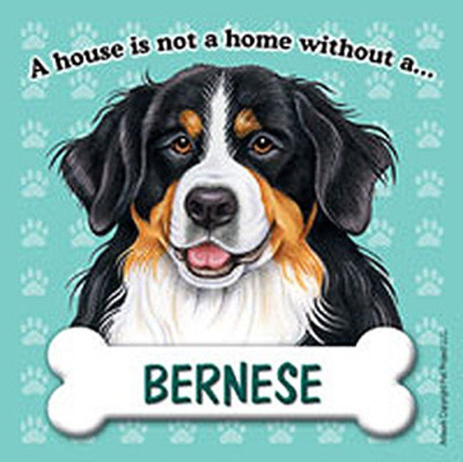 Bernese Mountain Dog Magnet House Is Not A Home Dog Boarding