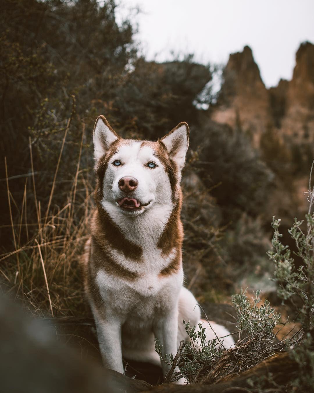 Photo By Codathewoof In Instagram Unique Dog Breeds Dog