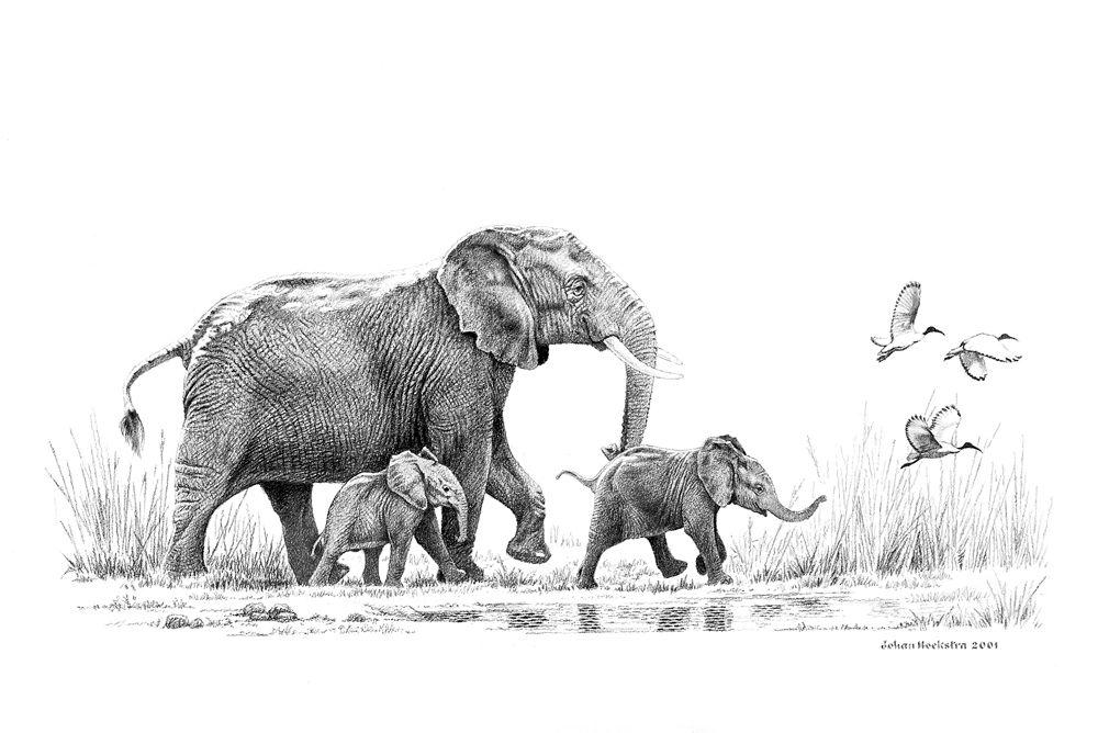 Elephants Animal Animals Calf: Elephant And Calves With Sacred Ibis
