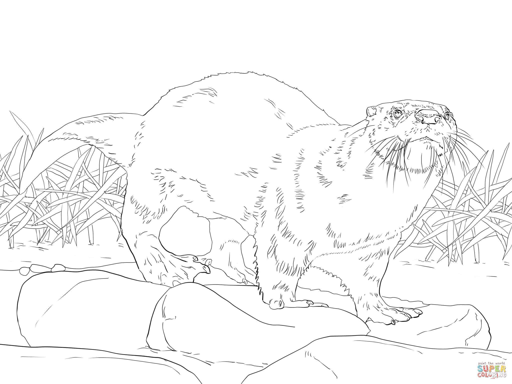 North American River Otter Coloring Page From Otters