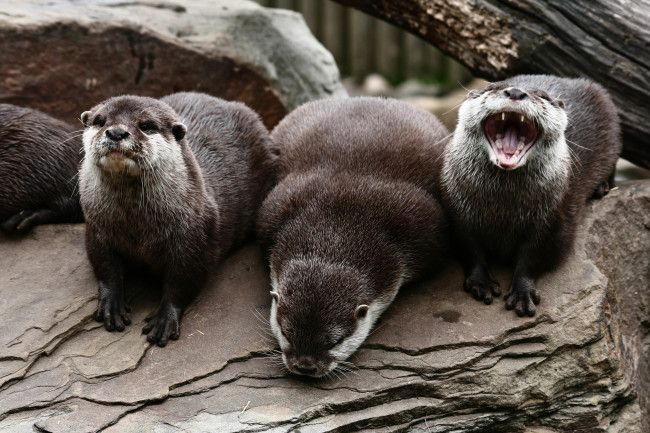 Otter is the only one laughing at his joke - August 21, 2013