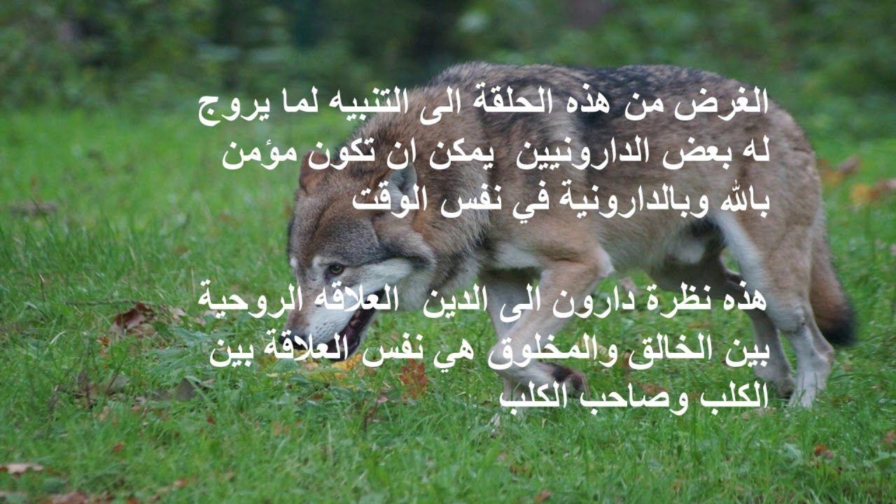 تخاريف دارون الكلب المؤمن Animals