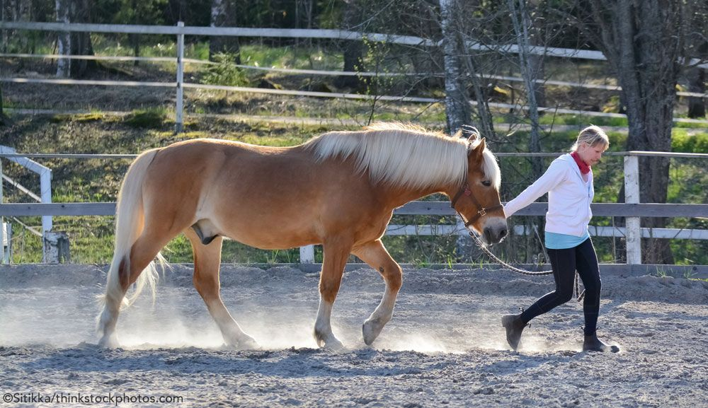 Ask the Vet Walking a Colicking Horse Horse Illustrated
