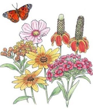 7250 butterfly habitat flower garden john scheepers kitchen garden rh br pinterest com Scheepers Bulbs John Scheeper