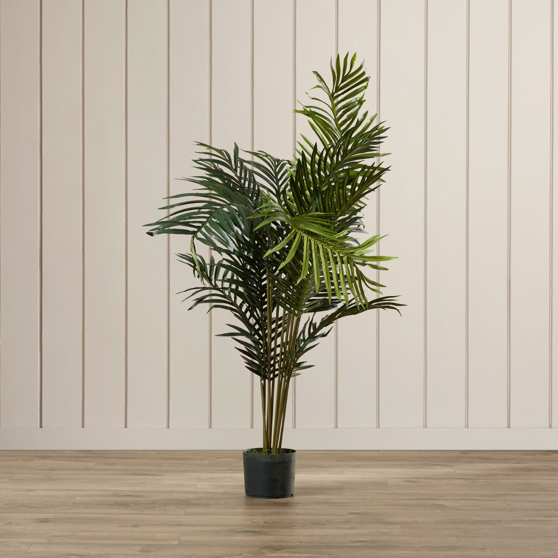 Youll Love The Black Hammock Palm Tree With Pot At