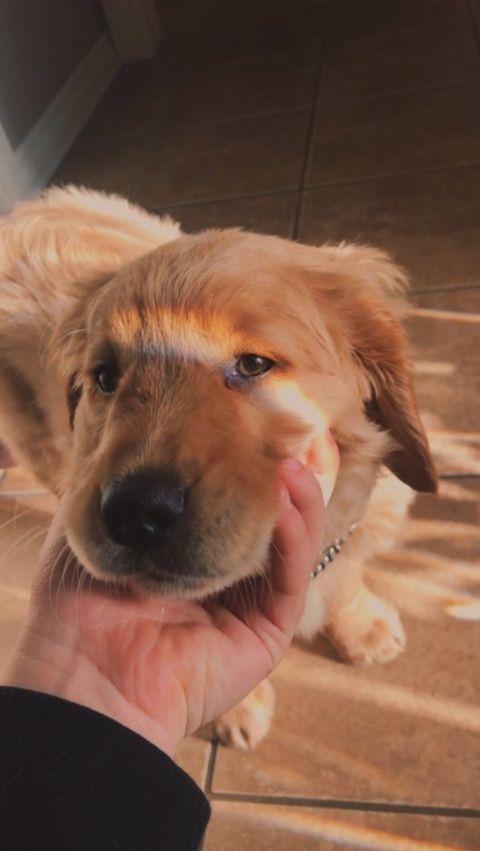 Photo of 5 maneras en que puedes mostrarle a tu perro el amor que entiende …