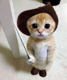 Puss in Boots | r/aww | Pinterest | Cats, Cute kittens and Cute cats