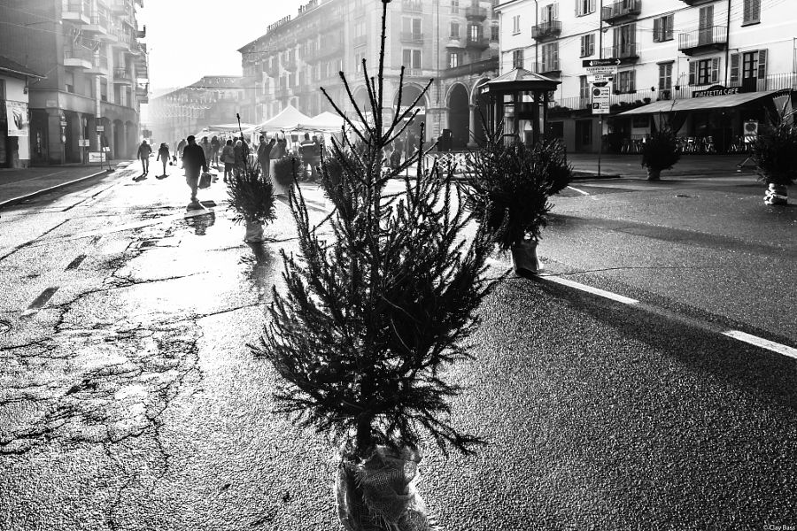 Natale 2015: slalom tra gli alberi by ClayBass