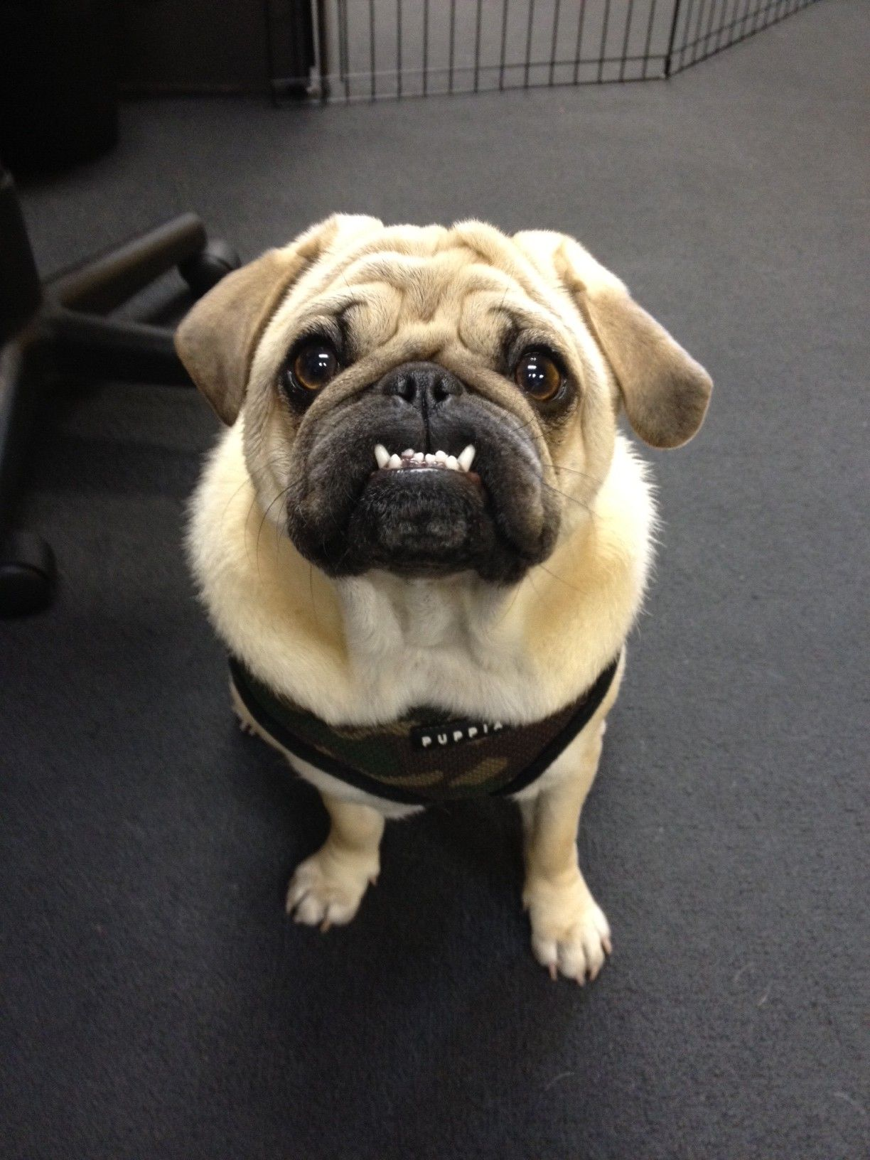 pet insurance that covers dental treatment