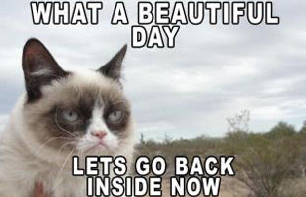beautiful day the 50 funniest grumpy cat memes complex