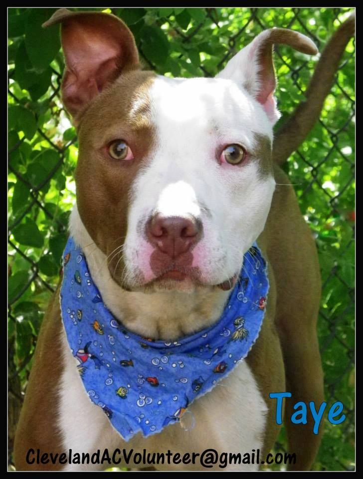 07 14 14 Urgent Needs Foster Rescue Adopter Taye Cleveland Animal Control Cleveland Ohio Email Clevelandacvolunteer Gmail Co Animal Control Animals Adoption