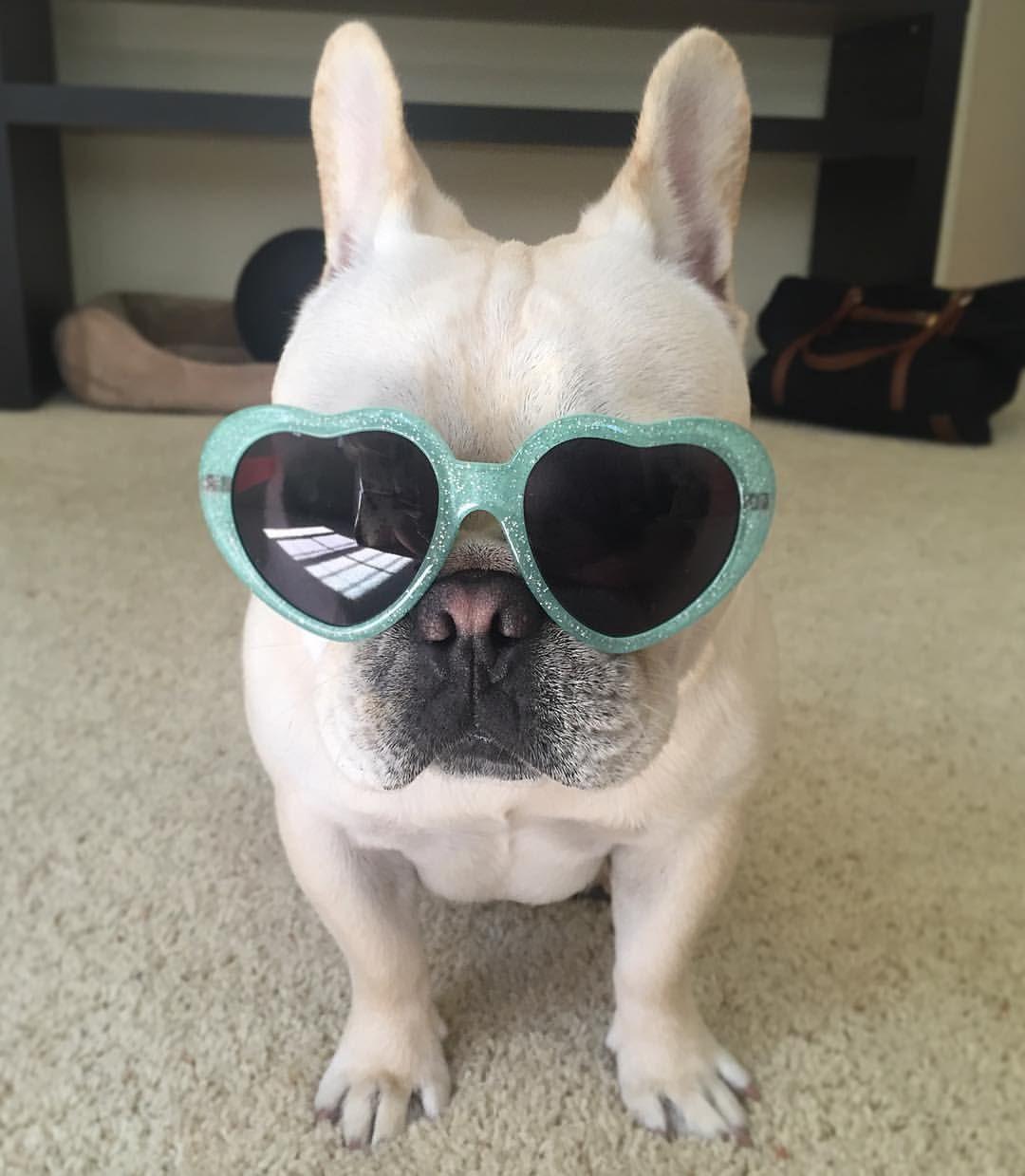 Nala, the Über Glam French Bulldog