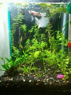 Did you know that having live aquarium plants can make ...