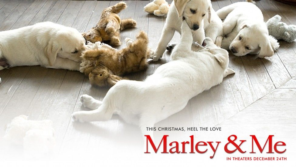 Marley Me Marley And Me Puppies And Kitties Marley And Me Movie