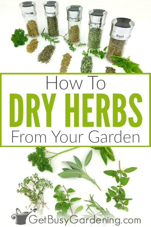 How To Dry Herbs The Right Way 6 Different Methods In 2020 Drying Fresh Herbs Drying Herbs Herbs