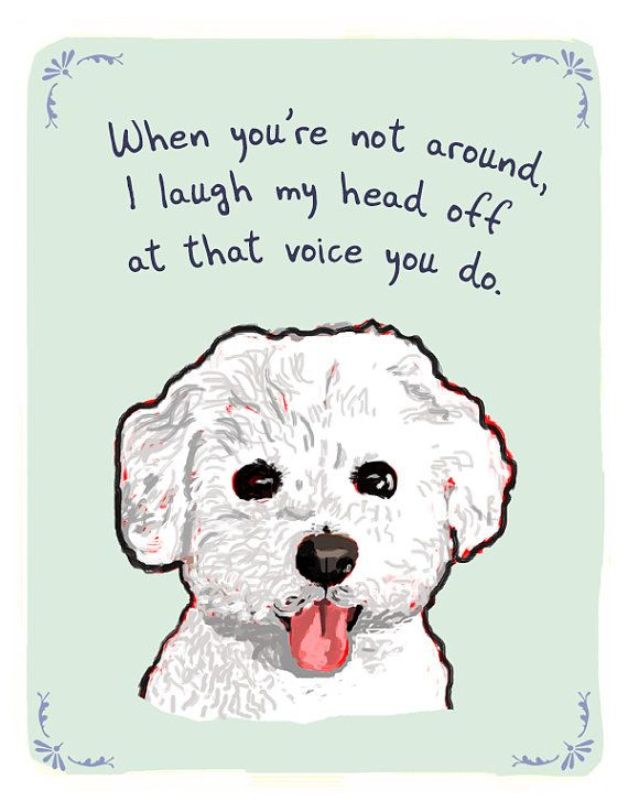 SO funny! My sister-in-law has a bichon, so I posted this for her on her Facebook wall. LOL!