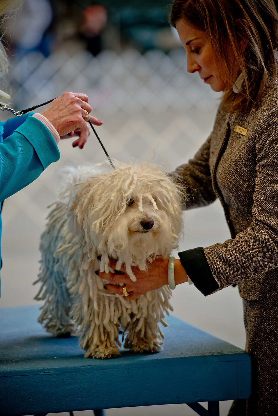 Craigslist In Des Moines Ia Pets For Sale - Wayang Pets