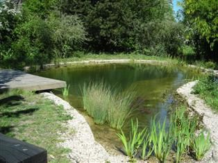 Plant filtered swimming pond natural swimming pool g for Natural pond plants