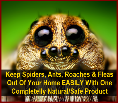 How to get rid of spiders naturally guaranteed effective for How to get spiders out of your house