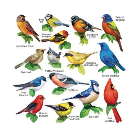 Songbirds II Multi-Shaped Jigsaw Puzzles, 500 pcs - Herrschners