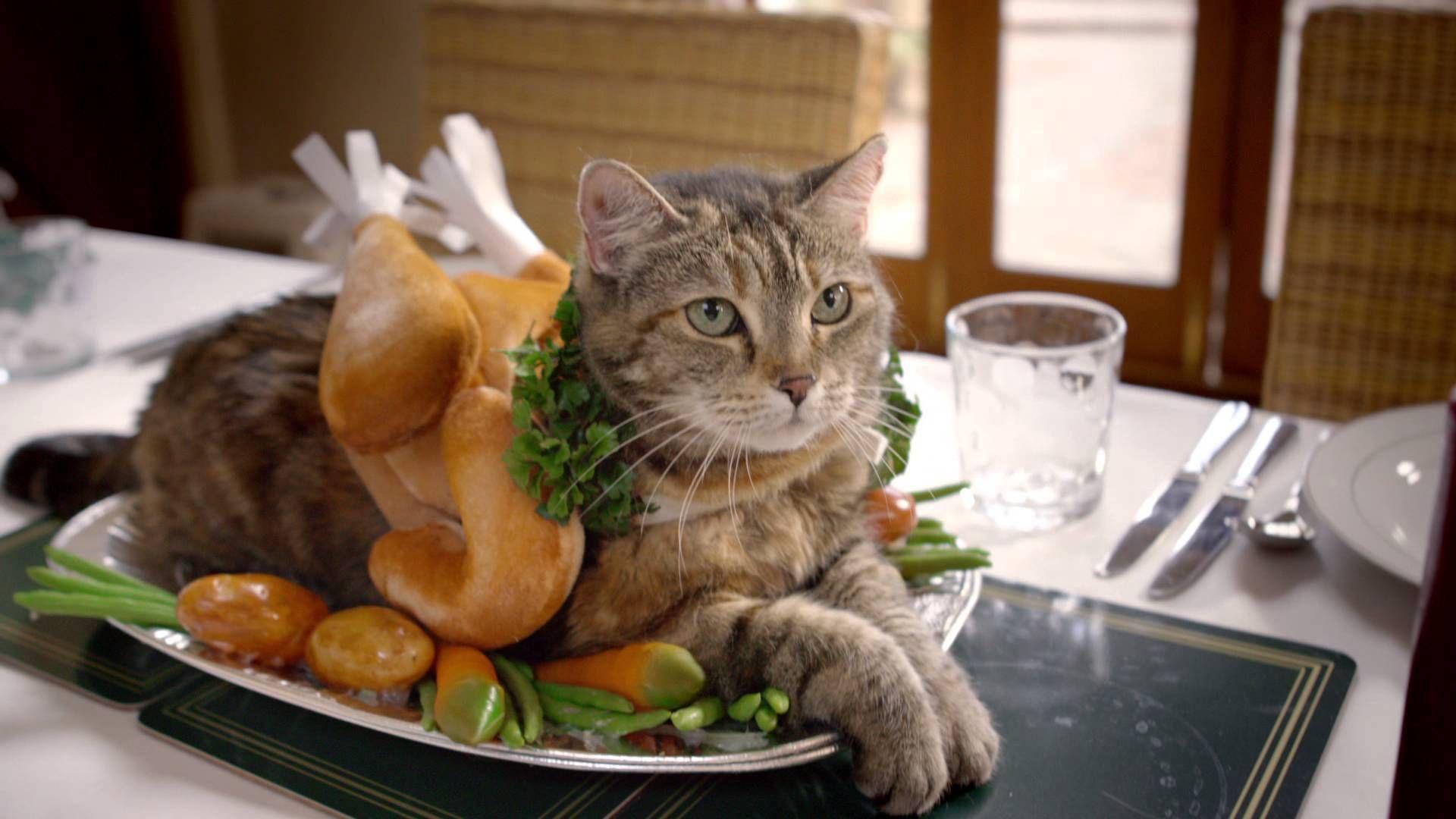 Temptations Say Sorry For The Holidays Pet Treats Cat Treats