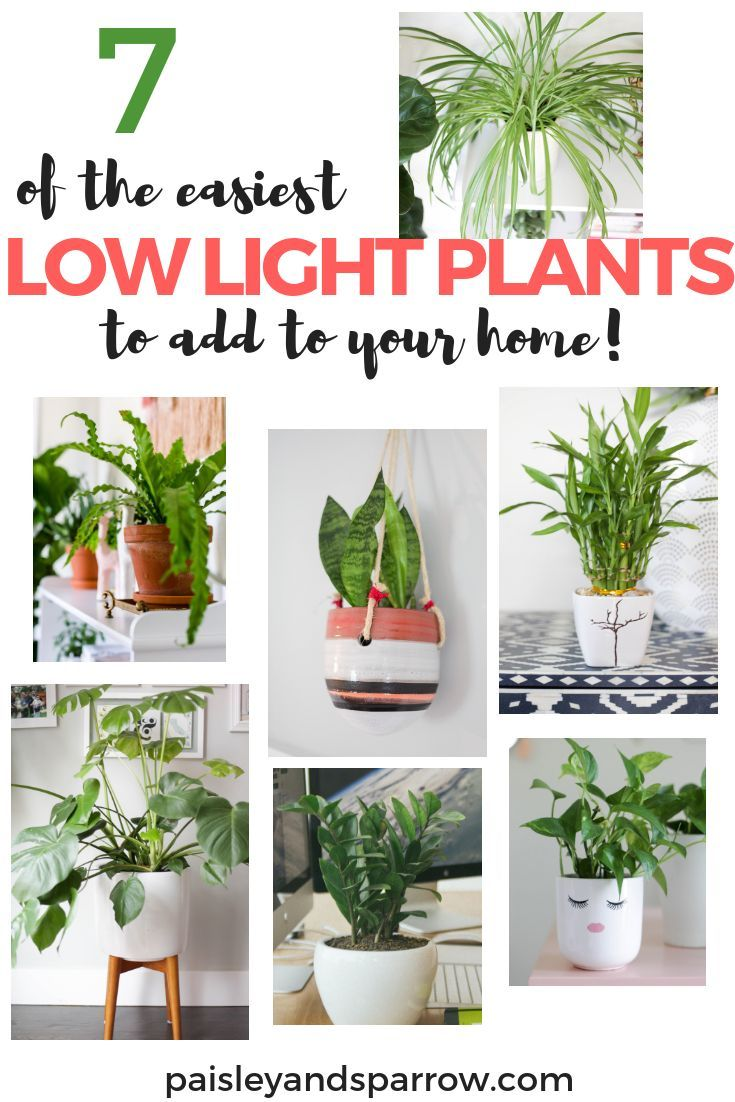 7 Amazing Low Light Plants - 7 Amazing Low Light Plants  7 super easy plants that don't need a lot of light to thrive!