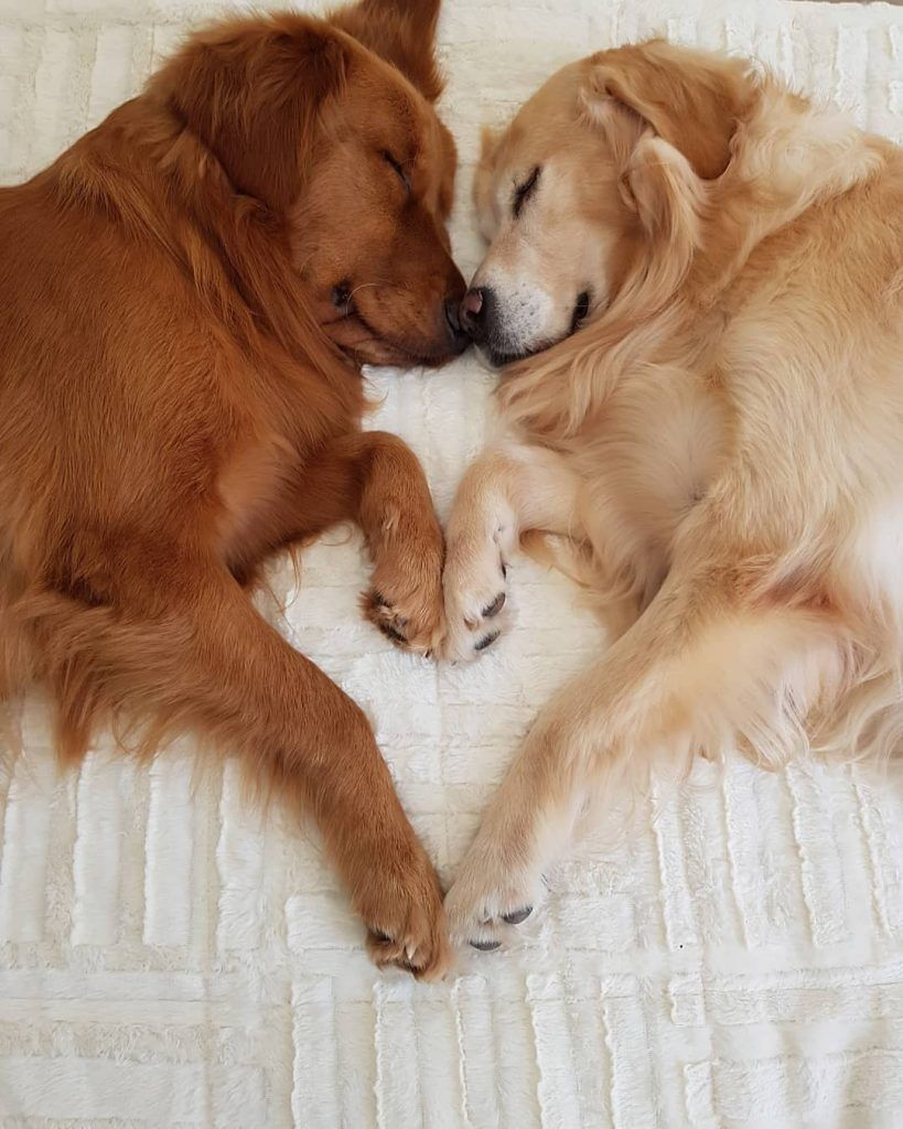 30 Cute Dog Photos For Dog Lovers Style O Trend Cute Dog