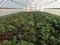 Storing Your Vegetables | Green Gardens Community Farm